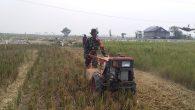 Permalink ke Serda M.Zainuri Bantu Petani Olah Lahan Pertanian