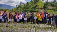 Permalink ke TNI – Pemda Aceh Tengah Bersama Dinas Pertanian Aceh Dan Petani Lakukan Panen Perdana Bawang Putih