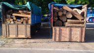 Permalink ke Hutan Kayumas Marak Ilegal Logging, LSM Siti Jenar  Menduga KRPH Dan Mandor Terlibat