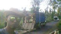 Permalink ke Polres Situbondo Harus Ungkap Kasus Ilegal Logging, LSM Siti Jenar : Diduga Kuat Kades Ikut Bermain