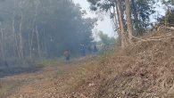 Permalink ke Kebakaran Lahan Perkebunan Karet Di Sungai Bunut, Diduga Dampak Dari Flaring Berhasil Dipadamkan