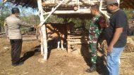 Permalink ke Meski Sapi H.Abdul Bahar Sudah Ditemukan, Polisi Masih Buru Pelaku